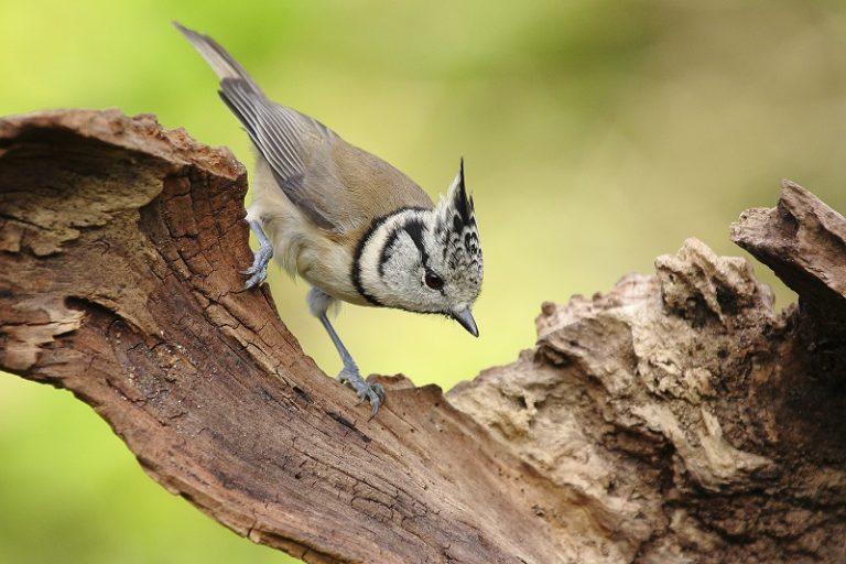 Zes redenen waarom vogels onmisbaar zijn