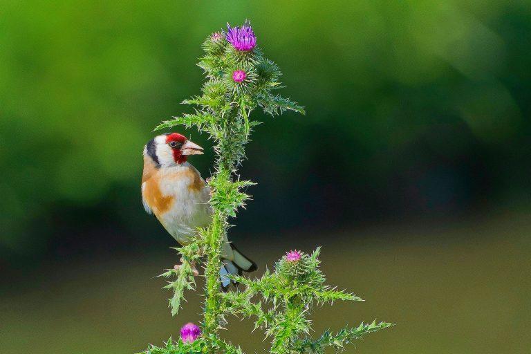 Genieten van vogels op Facebook, so adorable!