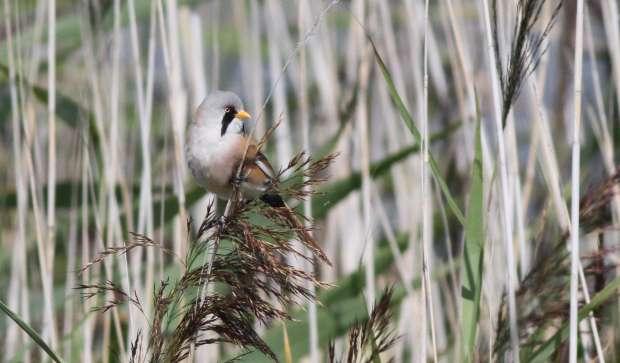 Vogelexcursie naar de Marker Wadden