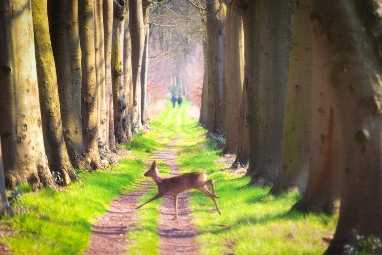 Over historische lanen op het Friese landgoed Oranjewoud