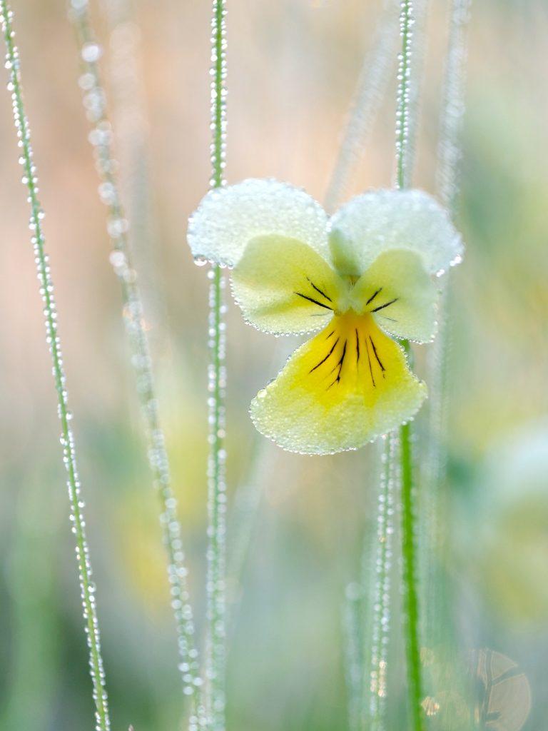 De mooiste foto's van wilde bloemen, hoe maak je ze?