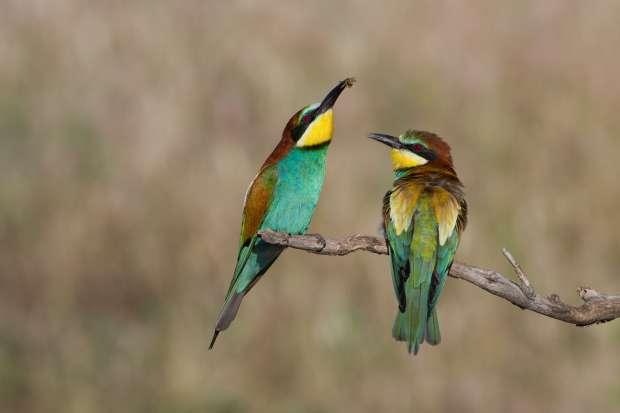 Nieuwe website voor vogelaars