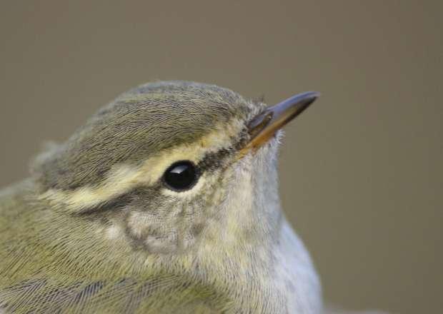 Roots vogelweekend op Texel