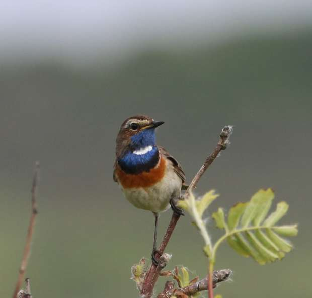 ROOTS vogelsafari's op Texel