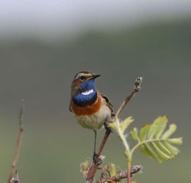 ROOTS Vogelsafari op Texel