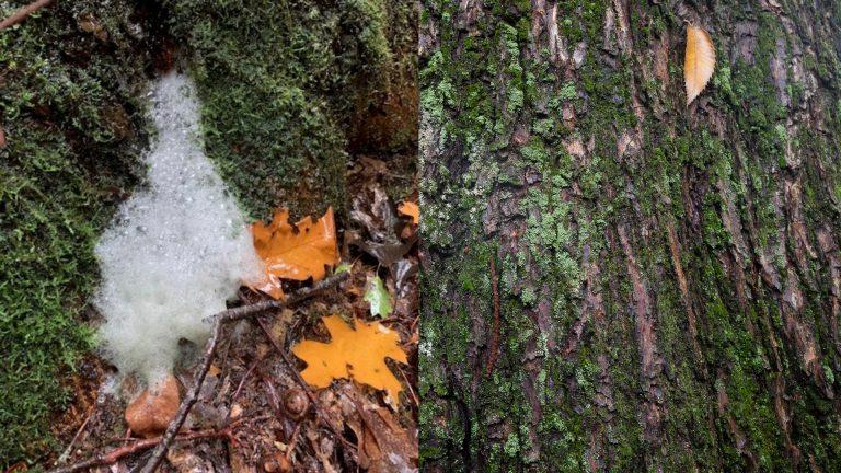 Wat een vraag: hoe ontstaat boomschuim?