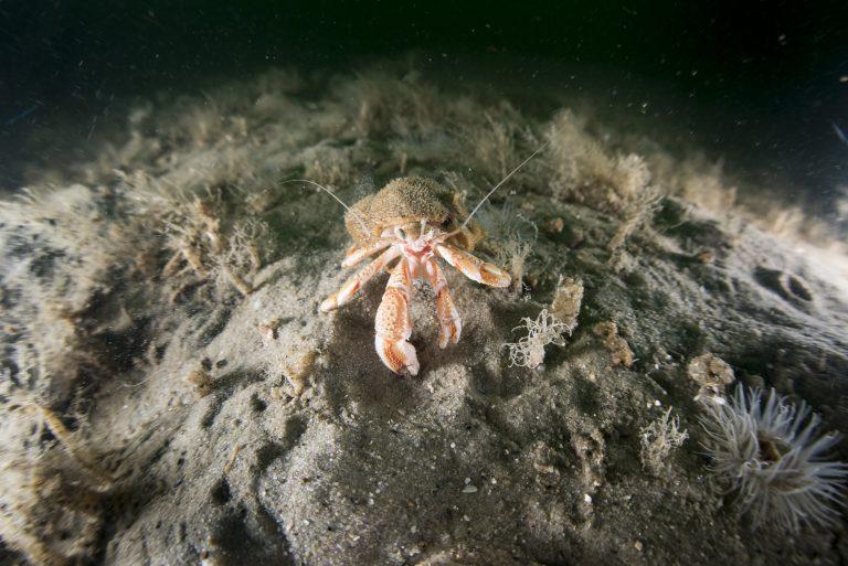 'Bescherm het Noordzeerif Borkumse Stenen!'