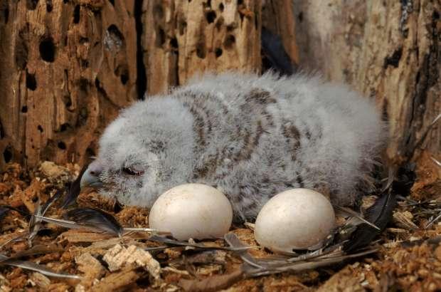 Briljante eieren