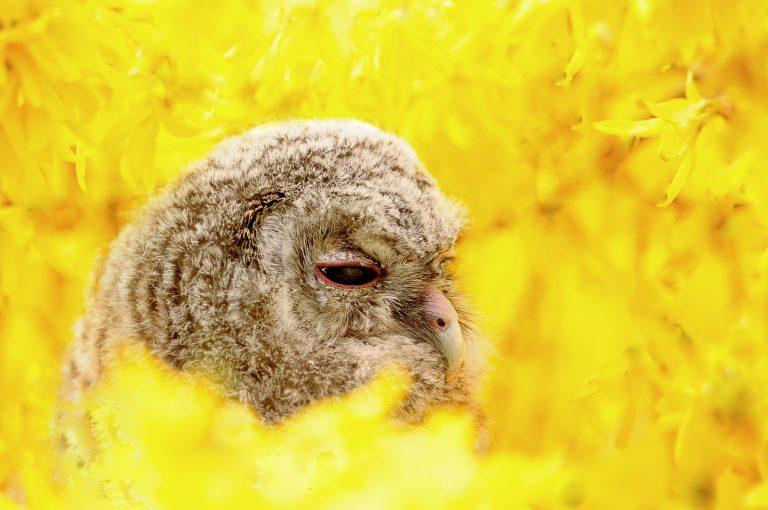 Nieuwe ontwikkelingen voor de camera's van Beleef de lente