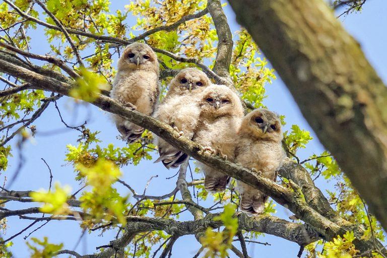 Beleef de Lente 2020 – volg het liefdesleven van uilenkoppels, zeearenden en meer vogels