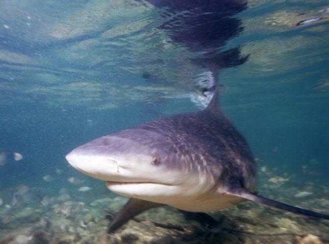De 10 meest afschrikwekkende vissen