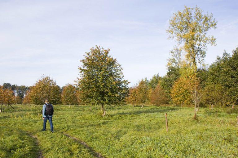 Nieuw natuurommetje: bomenweelde in het Roggebotzand