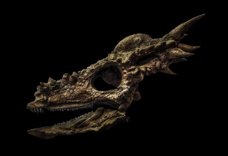 In Evolution komen de skeletten van dinosauriërs bijna tot leven