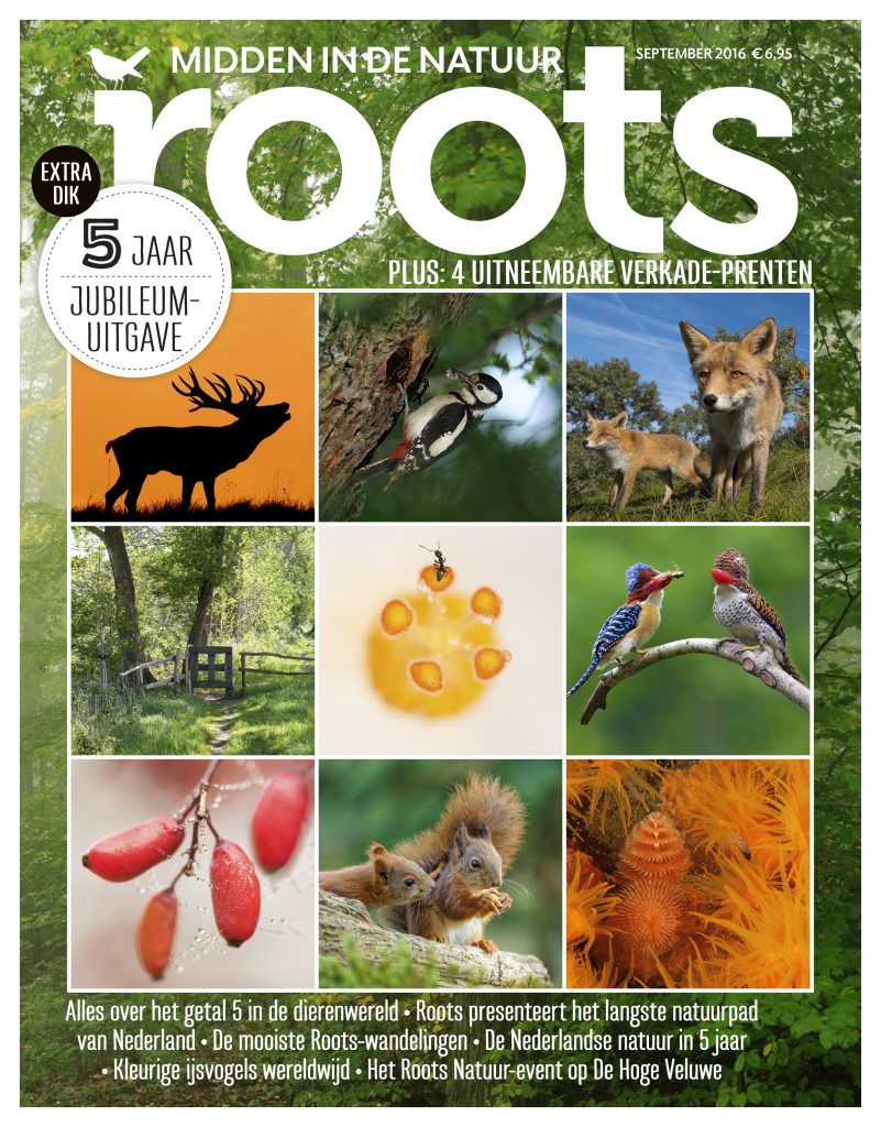 cover-roots-9-2016