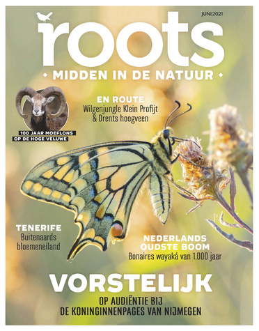 Roots editie 6 – 2021