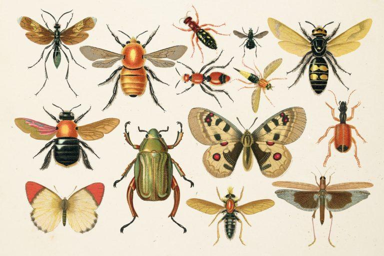 Nieuw verschenen: Roots Doe-boek Insecten en ander klein spul