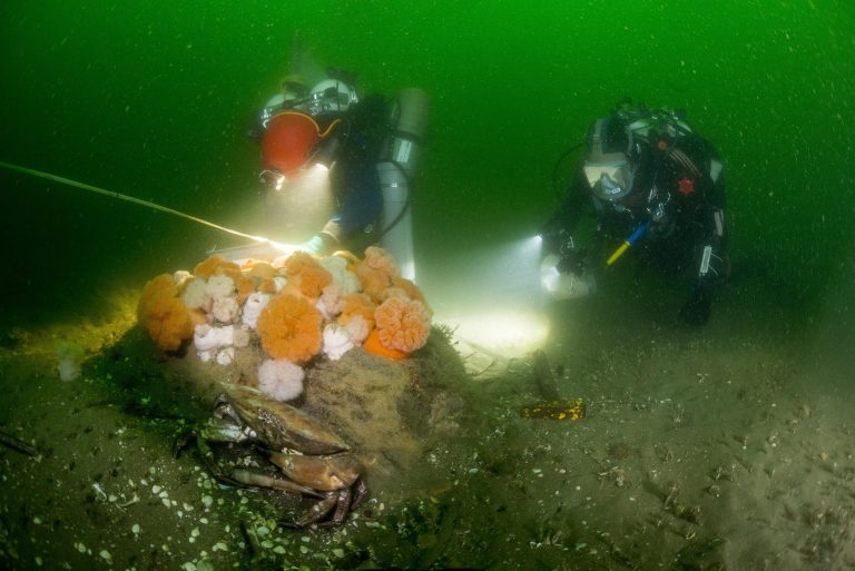 Expeditie naar Nederlandse zeenatuur
