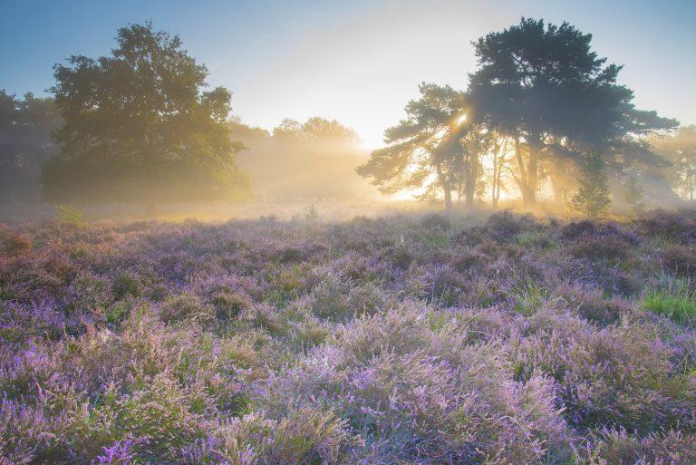 Nieuw natuurommetje: bijzondere bloeiers op de Groote Heide
