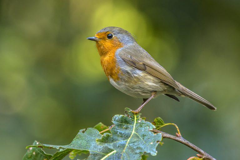 Uitslag tuinvogeltelling 2017