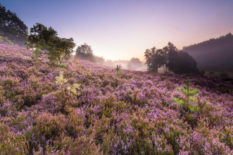 Nationaal park Hoge Kempen bij zonsopkomst