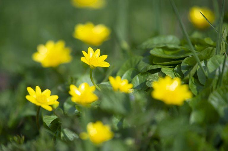 Nieuw natuurommetje: voorjaarssignalen in De Onlanden