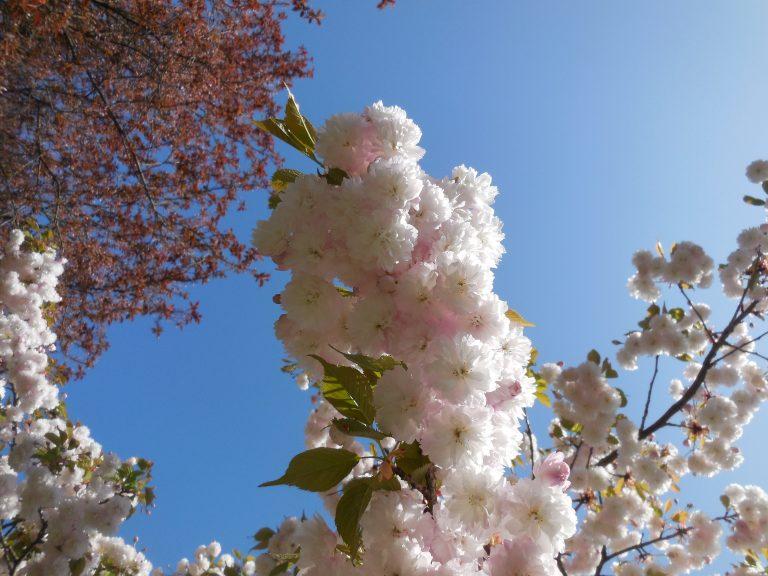 De lente is begonnen!