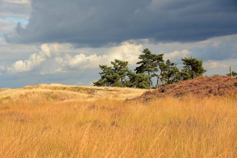 Van Gogh Nationaal Park moet toerist naar Brabant lokken