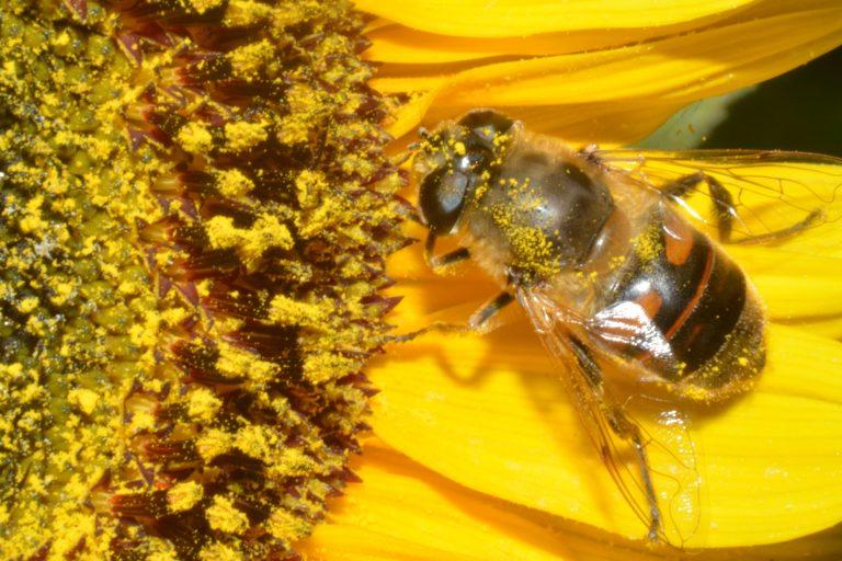 Hoe vriendelijk zijn de tuincentra voor de bijen?
