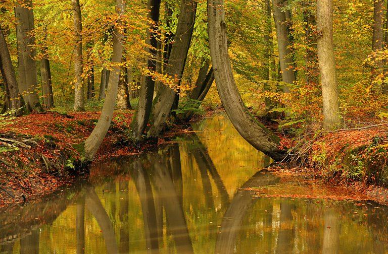 Vroege herfst