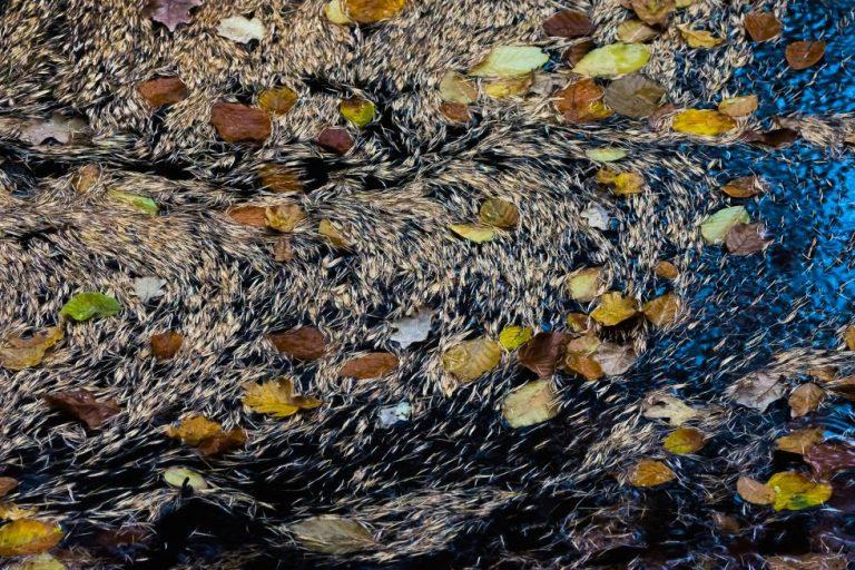 Kunst van de natuur: lariks naalden in een beekje