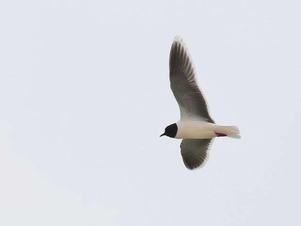 Vogelvaartocht naar de Marker Wadden