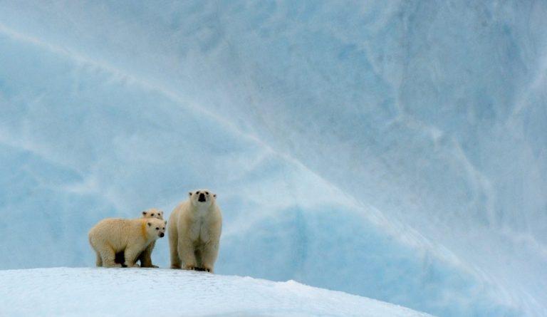 De 'Last Ice Area' wordt beschermd gebied