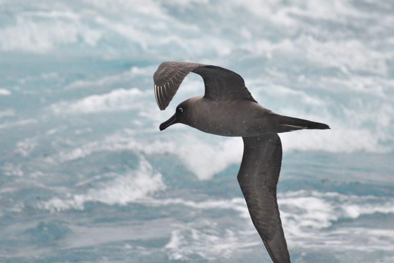 Zuidpoolblog deel 2: Omringd door albatrossen