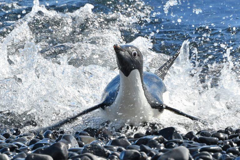 Zuidpoolblog deel 5: Afscheid van Antarctica met een Antarctic plunge