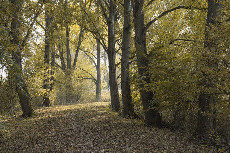 De winter is begonnen, nog een terugblik op de herfstbomen