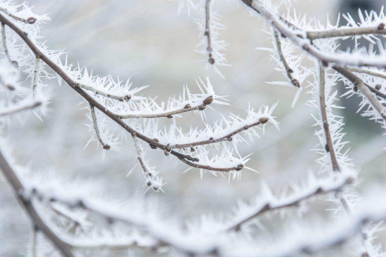 Winterse Wonderen