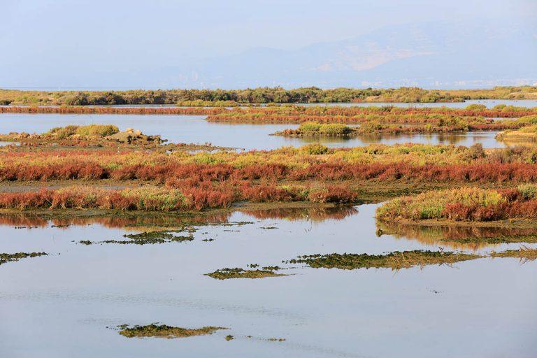 De Ebrodelta: Spaans vogelaarsparadijs