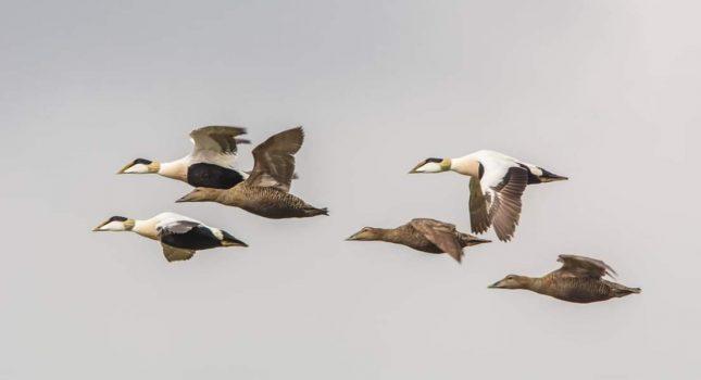 120 vogelsoorten op Texel