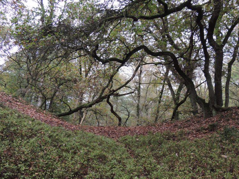 Natuurommetje Otterlose Bos: over eeuwenoude stuifduinen