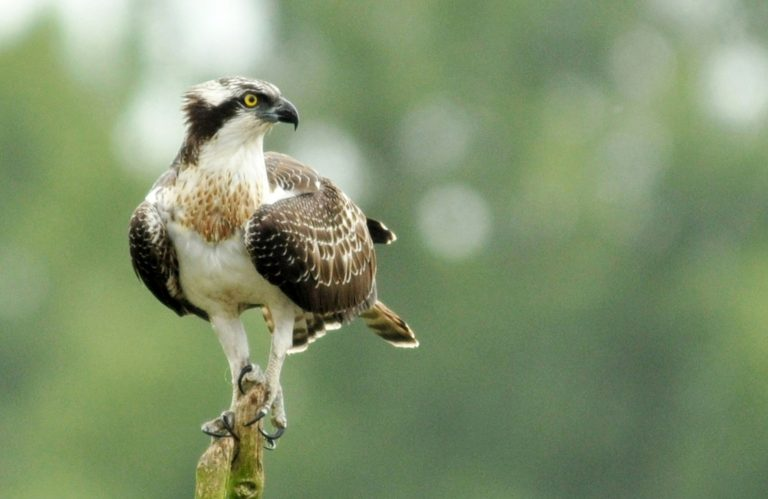 Mega vogelfeestje: Engelse Birdfair