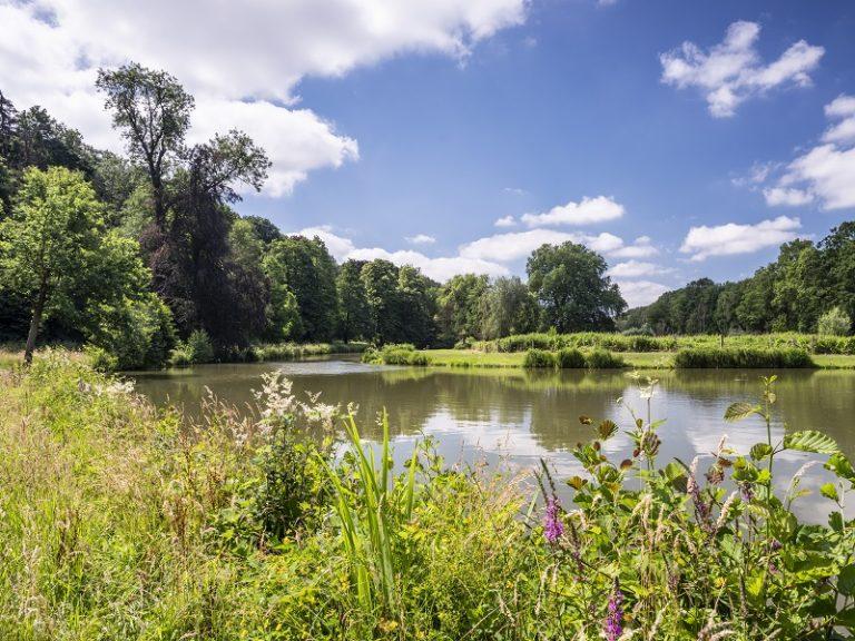 Natuurommetje Bunderbos: beversporen bij de Hemelbeek