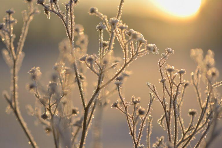 De 5 mooiste Roots-wandelingen om de winter te beleven