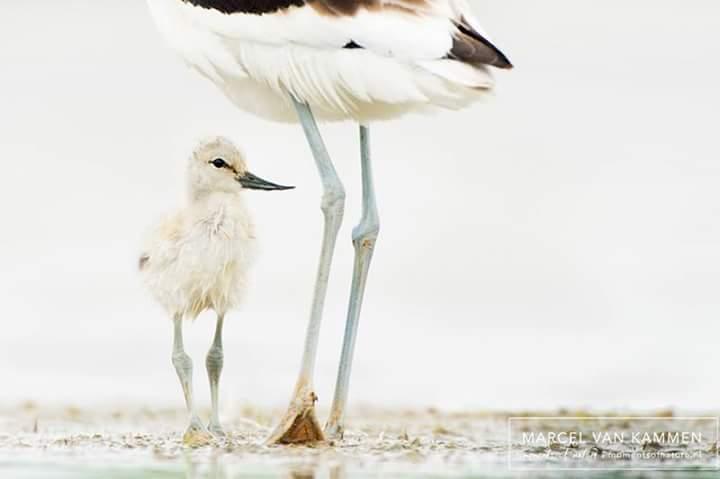 Kom ook naar het Wadden Vogelfestival op Texel