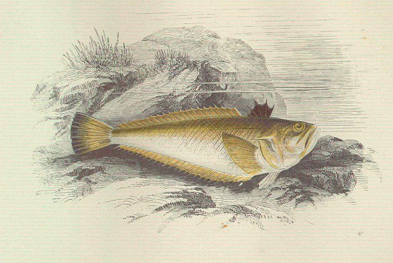 Broodje aap? In Nederland leven giftige vissen
