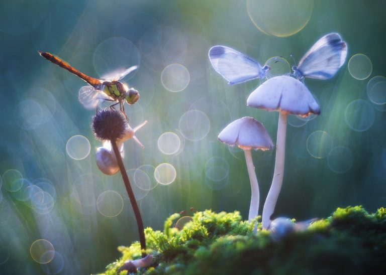 IGPOTY: De wereld in de achtertuin
