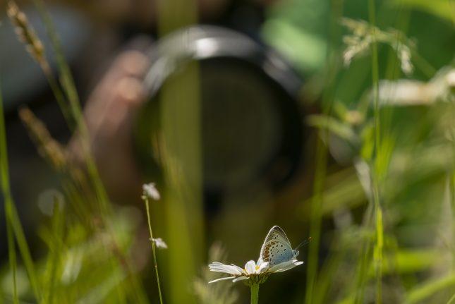 Vlinders fotograferen