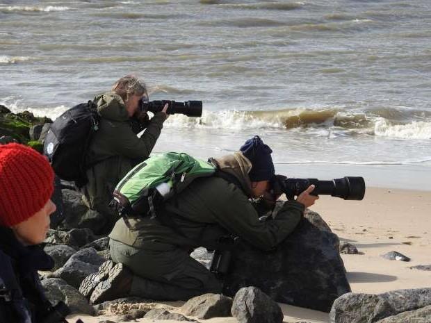 ROOTS Vogelsafari's 2021 op Texel en Vlieland