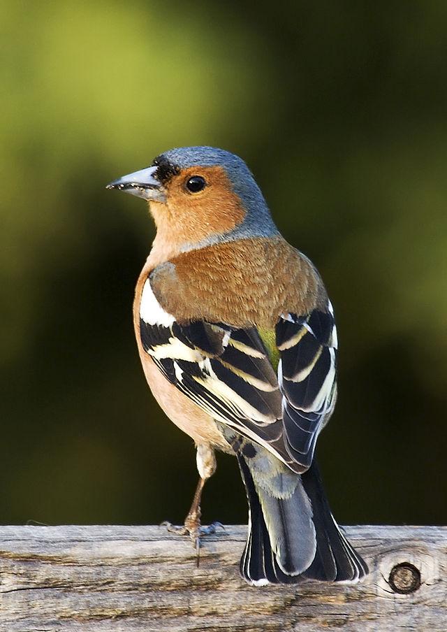 De uitslag van het Belgische Vogeltelweekend