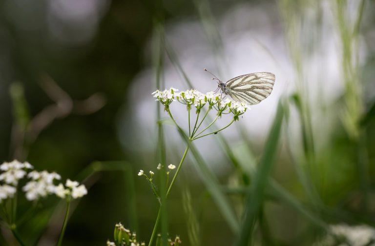Vliegensvlugge fladderaars