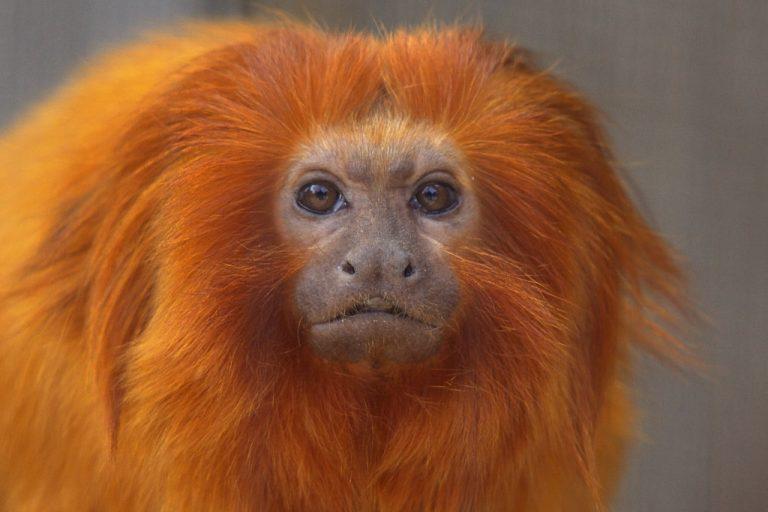 17 bijzondere apen gestolen